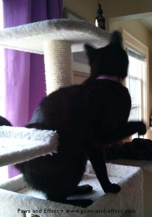 Belladonna hunts the Revitamal