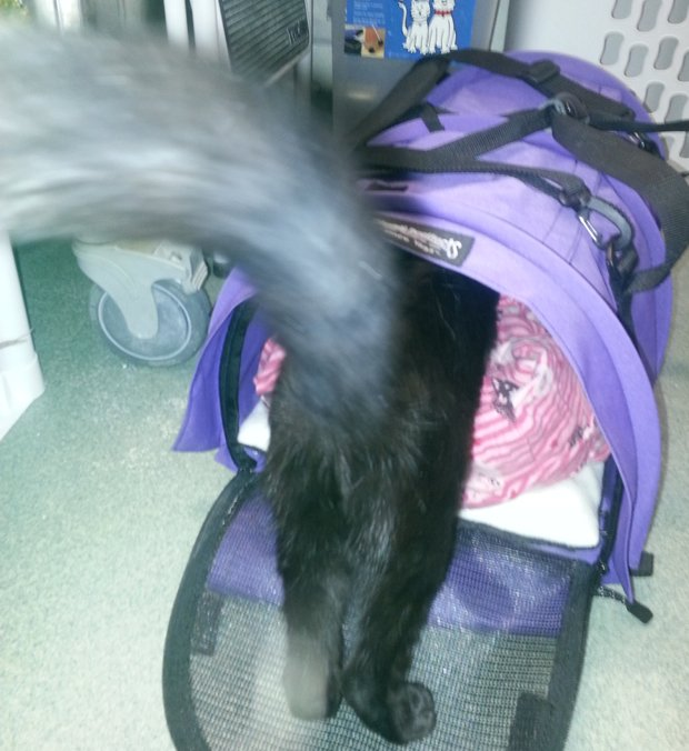 Bella hops in her carrier for the ride to her forever home.