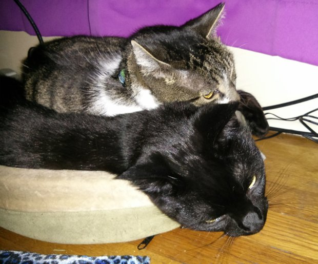 Bella and Thomas snuggling in a heated cat bed