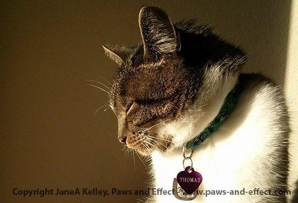 cat vet seattle