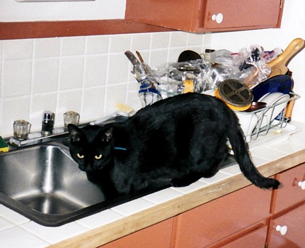 Siouxsie explores the kitchen sink, 1998