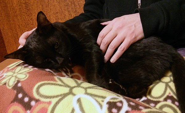 Siouxsie in my lap after getting the sedative part of the euthanasia.