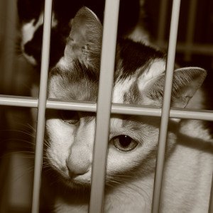 A sepia-toned photo of a sad-looking cat in a cage.