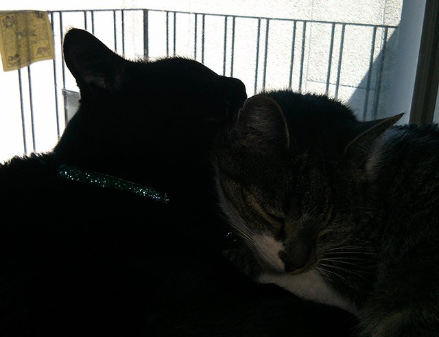 Thomas and Bella in silhouette
