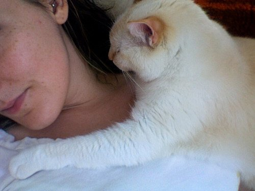 A white cat reaches his arm around a woman's neck