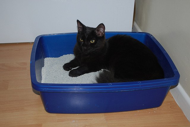 A black cat resting in a litter box