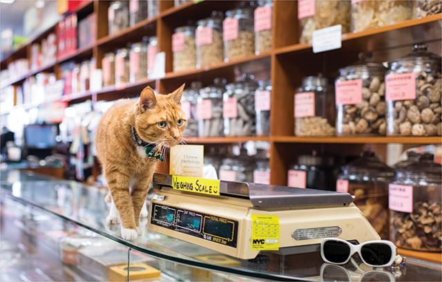 Bobo, a shop cat at Japan Market in Manhattan