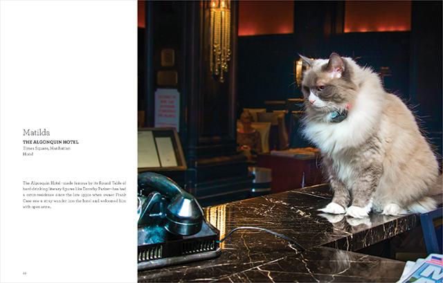 Matilda the Algonquin Cat