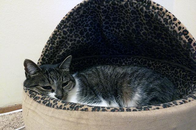 #WasteLessLitter with World's Best Cat Litter.